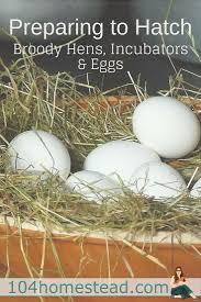 243 best fresh eggs images on pinterest backyard chickens