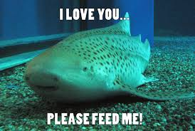 Funny Shark Memes - cute sharks 15 apex predators you may feel compelled to hug but