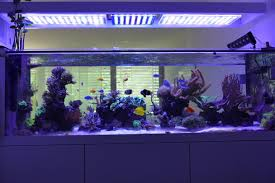 Reef Aquarium Lighting 840 Liter Reef Aquarium From Switzerland U2022orphek