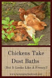218 best backyard chickens images on pinterest backyard chickens