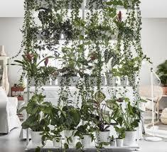 browse houseplants gardenista