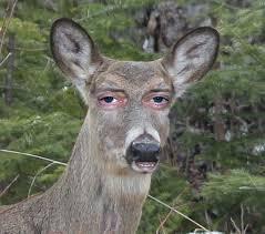 Deer Meme - steve buscemi deer meme collection
