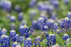 5 pictures stormy spring and texas bluebonnets andy u0027s travel blog