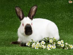 5 of the best rabbit breeds for children pets4homes