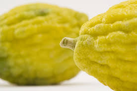 etrog for sale sukkot the meaning sukkah and lulav and etrog