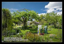 Hops On Trellis Platform In Apple Tree W Golden Hops On Tipi Trellis