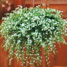 Flowers For Morning Sun - best 20 hanging baskets ideas on pinterest hanging flower