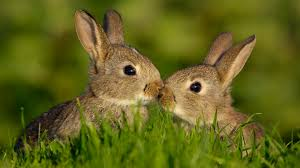 baby rabbits playing other cute animals hd animal wallpaper