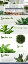 beautiful indoor plants redefine your home beauty with indoor plants infographic