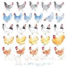 chicken cards greetings cards chicken presents