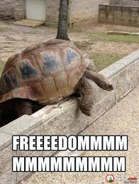 Funny Turtle Memes - freedom funny memes funny best of the funny meme
