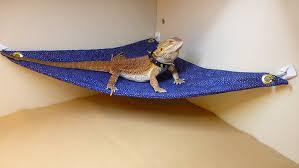 carolina designer dragons hammock bearded dragons blue gold