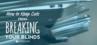 Fix My Blinds Com How To Keep Cats From Breaking Blinds The Finishing Touch
