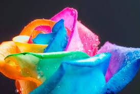 multicolored roses learn how to make simple colored and rainbow roses