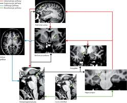 new experimental and clinical links between the hippocampus and