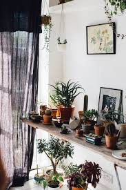 Plants For Living Room Green Living In Our Very Own House Of Plants Lobster And Swan