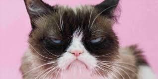 Grumpy Cat Birthday Memes - birthday memes grumpy cat 4birthday info
