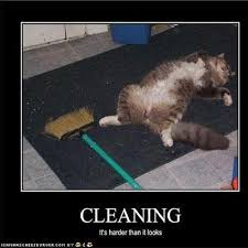 Carpet Cleaning Meme - photos red carpet rug cleaning carpet cleaning shooing