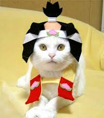 Kitten Halloween Costumes Pet 25 Cat Fashion Show Images Animals Cats