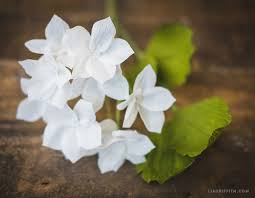 stephanotis flower crepe paper stephanotis flower lia griffith