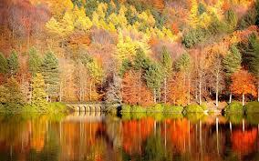 fall pumpkin wallpaper free fall desktop wallpapers group 77