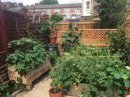 urban vegetable gardening jan 2018 the challenge u2014 serena lee