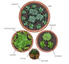 salad garden in containers bonnie plants