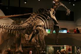 the dinosaur museum sharp keen