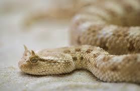 white tan snake free stock photo