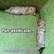 Anxiety Cat Memes - perpendicular the more you know the cattery pinterest