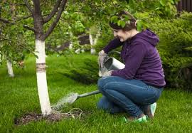 watering trees in canada timberlane tree service