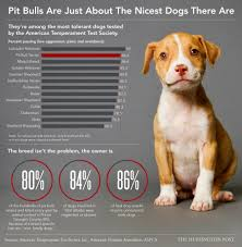 american pitbull terrier wanted pit bulls are just about the nicest dogs there are