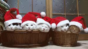 cat christmas animal christmas gif find on giphy