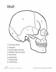 best 25 skeletal system worksheet ideas on pinterest skeletal