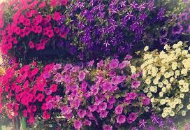 imágenes asombrosas naturaleza flores asombrosas naturaleza colorida jardín perfecto foto de