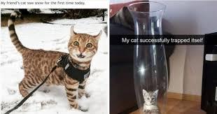 Hilarious Cat Memes - 10 purrfectly hilarious cat memes guaranteed to make you laugh