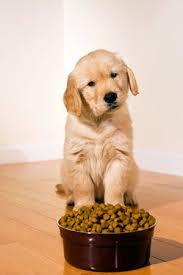 Best Flooring With Dogs Best Flooring For Dogs Solved Bob Vila