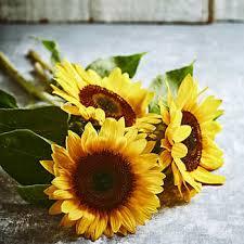 bulk flowers bulk flowers costco