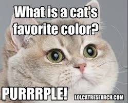 Cute Kitty Memes - nafsht archives lol cat research