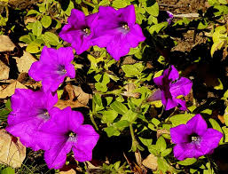 flowers san diego l floyd s artwork photography