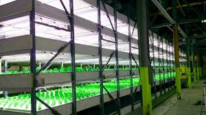 commercial led grow lights scaleable commercial led grow lights