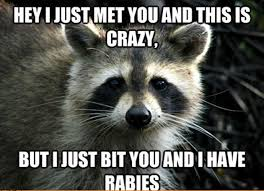 Funny Raccoon Meme - animal memes the 50 best cute and funny animal memes copyright