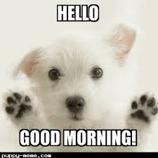 Cute Good Morning Meme - morning