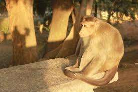 Monkey Bench Monkeys Potpourri