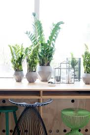 6 indoor house plants every londoner should own london evening