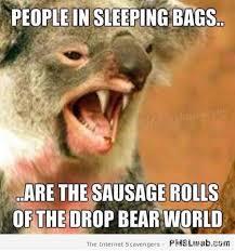 Bear Memes - 18 funny drop bear meme pmslweb