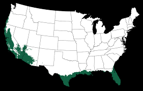 Gardening Zones Usa Map - rainbow eucalyptus tree for sale online the tree center