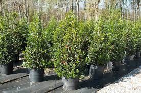 trees atlanta landscaping company