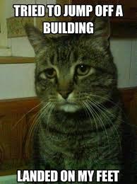 Building Memes - jumped off a building funny cat meme