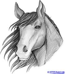 gallery images of sketches of horses drawing art gallery